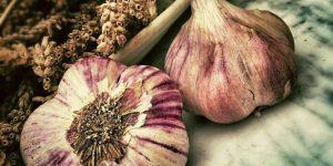 REMEDIOS CASEROS CONTRA LOS MOSQUITOS » Reconoce las plantas medicinales que necesitas