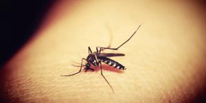 CREMAS PARA LAS PICADURAS DE MOSQUITOS » Reacciona a tiempo ante las alergias